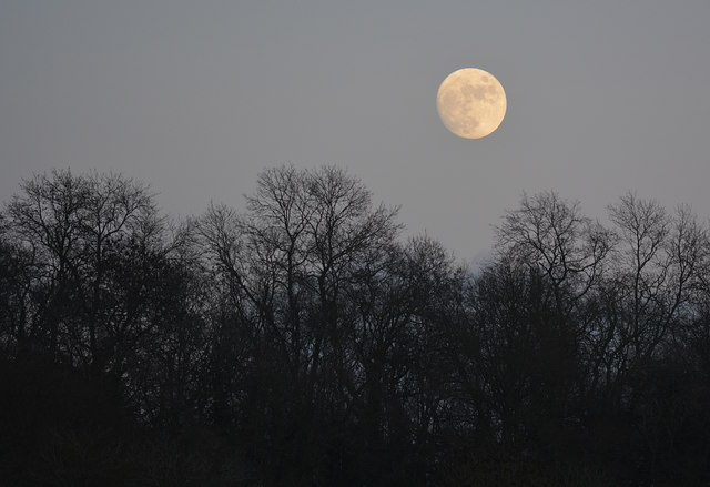 wood-moon
